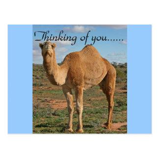 Camel Desert Destiny Zazzle Thinking of You Postcard