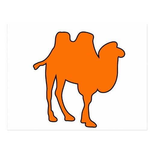 Camel Desert Horse Hump Mammal Postcard