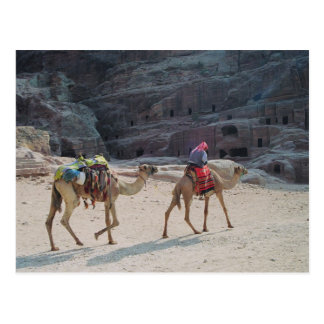 Camel Desert Middle East Peace Love Nature Destiny Postcard