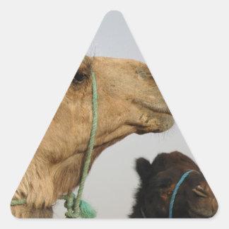 Camel Desert Middle East Peace Love Nature Destiny Triangle Sticker