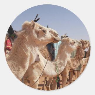 Camel Desert Middle East Peace Love Nature Destiny Classic Round Sticker