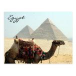 camel egypt pyramid postcard