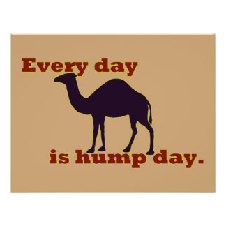 """Camel """"Every Day is Hump Day"""" Flyer"""