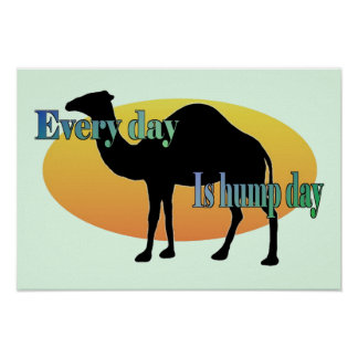 Camel - Every day is hump day Poster