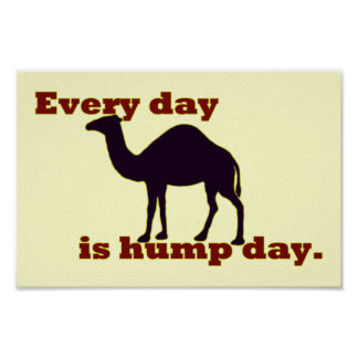 """Camel """"Every Day is Hump Day"""" Poster"""
