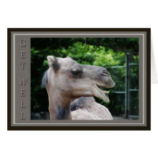 Camel Face Get Well Wishes Card