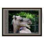 Camel Face Get Well Wishes Greeting Card