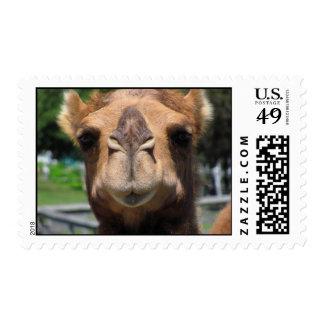 Camel Face Postage Stamp