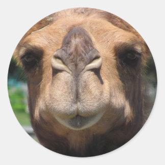 Camel Face Round Sticker