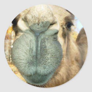 Camel Face Stickers
