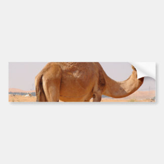 Camel for Arabs Bumper Sticker