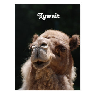 Camel from Kuwait Postcards