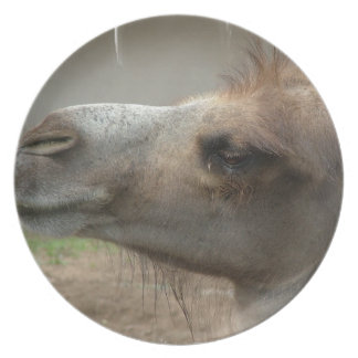 Camel Head  Plate