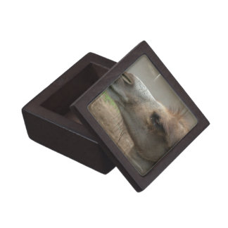 Camel Head  Premium Gift Box