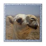 Camel Head Tile