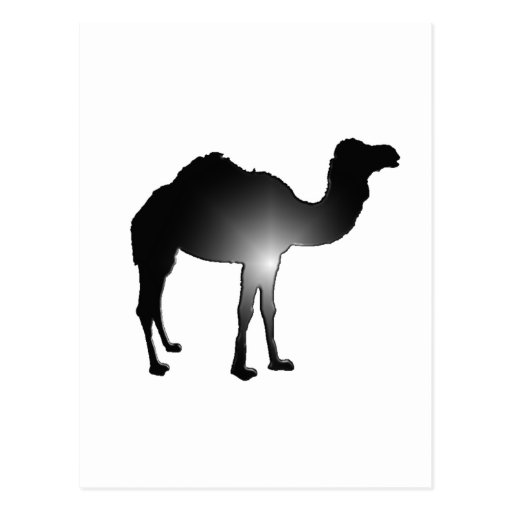 Camel illusion postcard