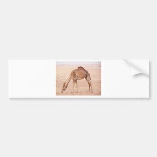 Camel in desert car bumper sticker