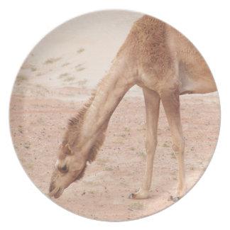 Camel in desert dinner plate