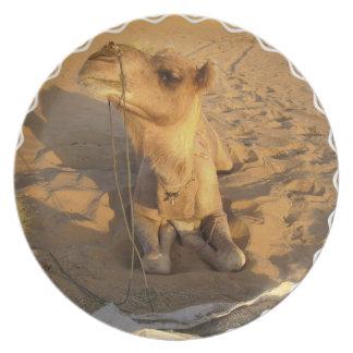 Camel in Desert Plate