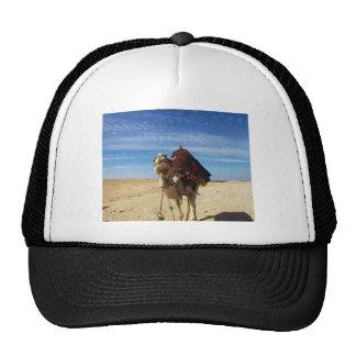 Camel in Egypt photograph Trucker Hat