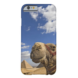 Camel in front of the pyramids of Giza, Egypt, Barely There iPhone 6 Case