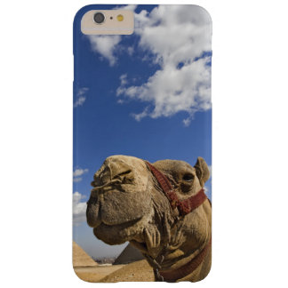 Camel in front of the pyramids of Giza, Egypt, Barely There iPhone 6 Plus Case