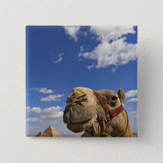 Camel in front of the pyramids of Giza, Egypt, Button