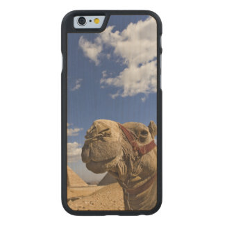 Camel in front of the pyramids of Giza, Egypt, Carved® Maple iPhone 6 Case