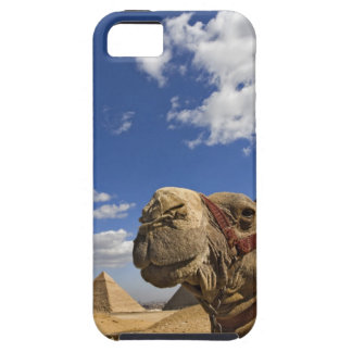 Camel in front of the pyramids of Giza Egypt iPhone 5 Cover