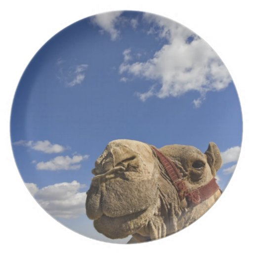 Camel in front of the pyramids of Giza, Egypt, Dinner Plate