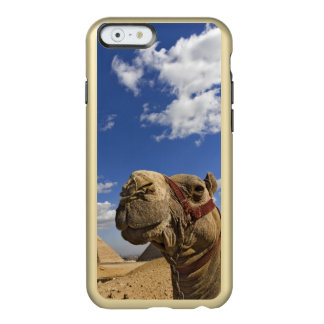 Camel in front of the pyramids of Giza, Egypt, Incipio Feather® Shine iPhone 6 Case