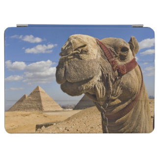 Camel in front of the pyramids of Giza, Egypt, iPad Air Cover