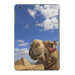 Camel in front of the pyramids of Giza, Egypt, iPad Mini Retina Cases