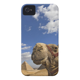 Camel in front of the pyramids of Giza, Egypt, iPhone 4 Case