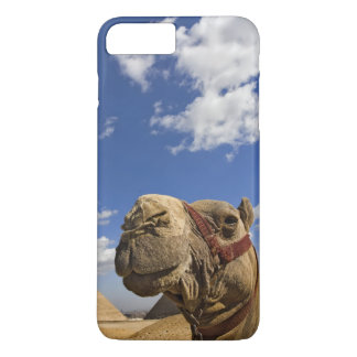 Camel in front of the pyramids of Giza, Egypt, iPhone 7 Plus Case
