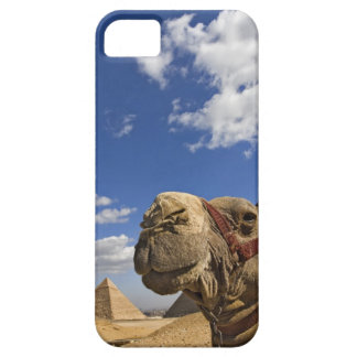 Camel in front of the pyramids of Giza, Egypt, iPhone SE/5/5s Case