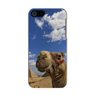 Camel in front of the pyramids of Giza, Egypt, Metallic iPhone SE/5/5s Case