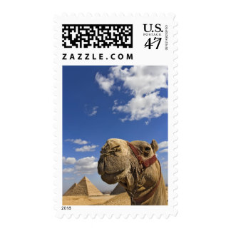 Camel in front of the pyramids of Giza, Egypt, Postage