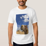 Camel in front of the pyramids of Giza, Egypt, Tee Shirts