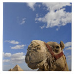 Camel in front of the pyramids of Giza, Egypt, Tile