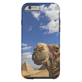 Camel in front of the pyramids of Giza, Egypt, Tough iPhone 6 Case