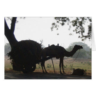 Camel in India Card