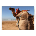 camel kiss greeting cards
