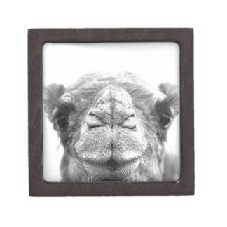 Camel Kisses Fun Closeup Photo Gift Box