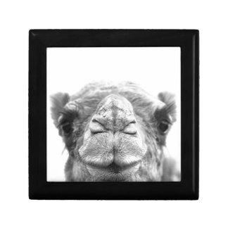 Camel Kisses Fun Closeup Photo Jewelry Box