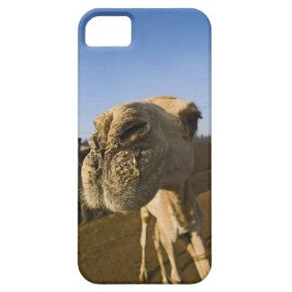 Camel market, Cairo, Egypt iPhone 5 Case