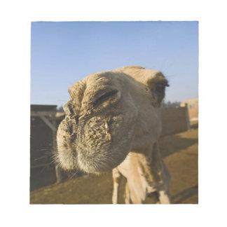 Camel market, Cairo, Egypt Memo Note Pads