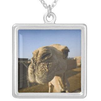 Camel market, Cairo, Egypt Square Pendant Necklace