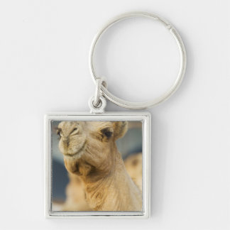 Camel Market near Cairo, Egypt Silver-Colored Square Keychain