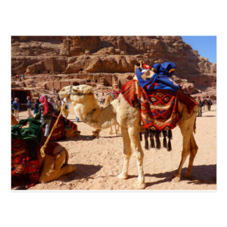 Camel Middle East Nature Animals Destiny Gifts Postcard